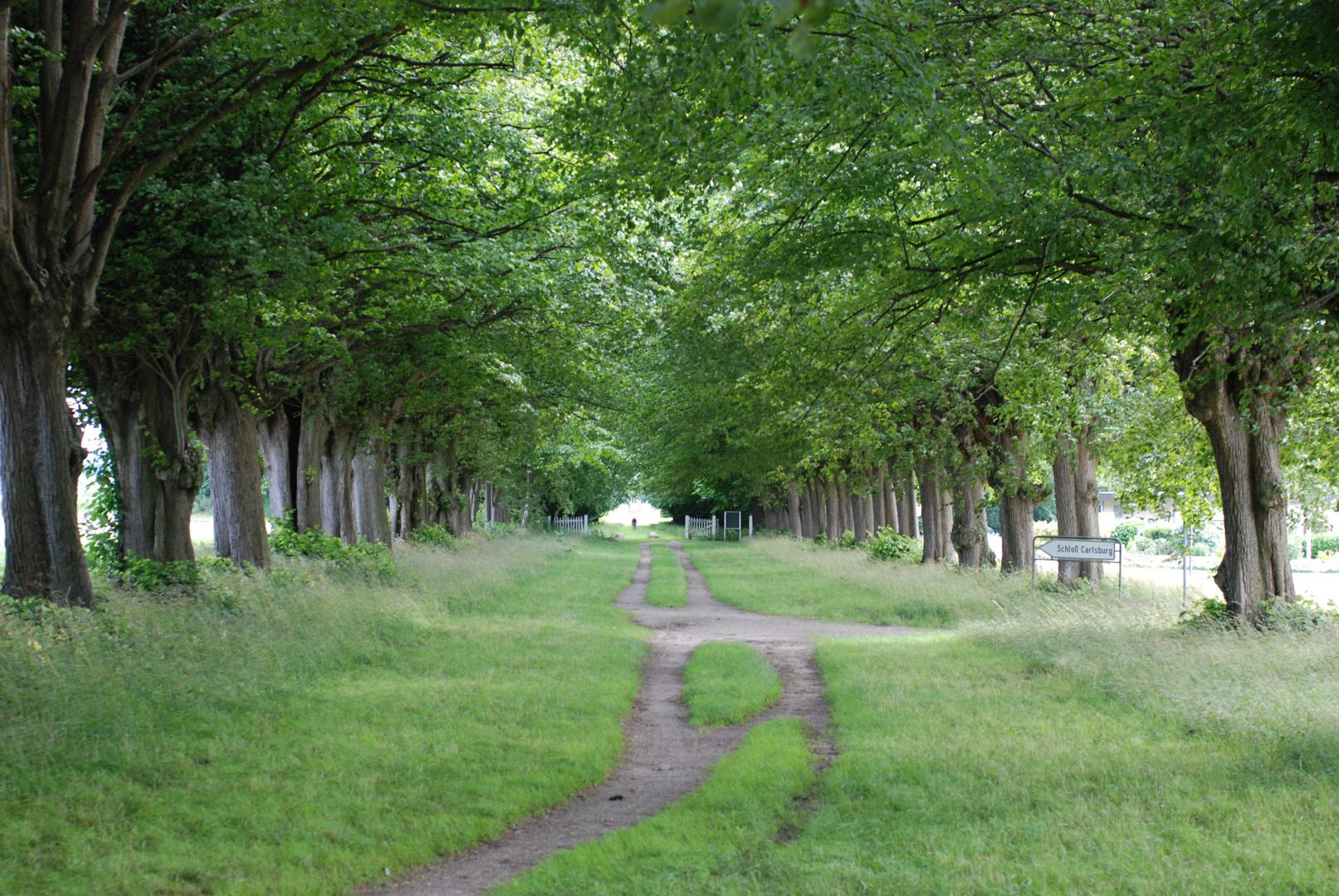 Der alte weg zum Schloß Carlsburg ...