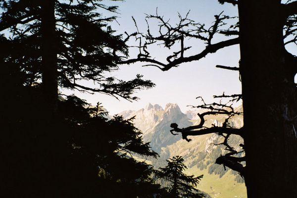 Der ALTMANN im Alpsteingebirge