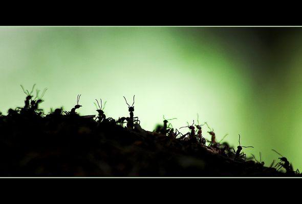 Der Ameisenkönig -reload-