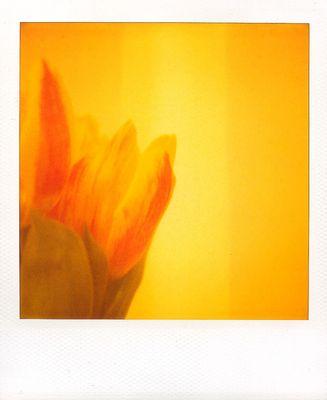 Der Antiantiblumengruss
