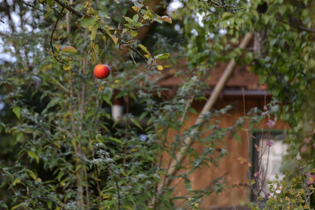 Der Apfel fällt. Nicht. Weit vom Stamm.