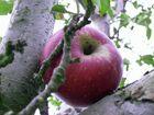 ~der Apfel fiel nicht weit~