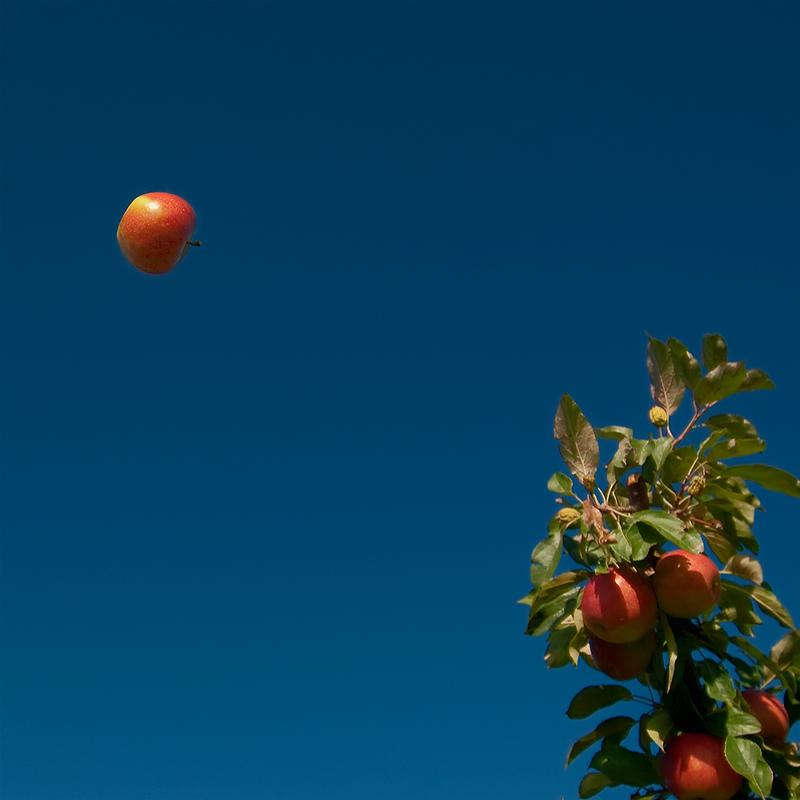 Der Apfel fliegt ...
