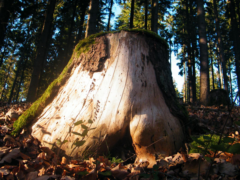 Der Arsch des Waldes