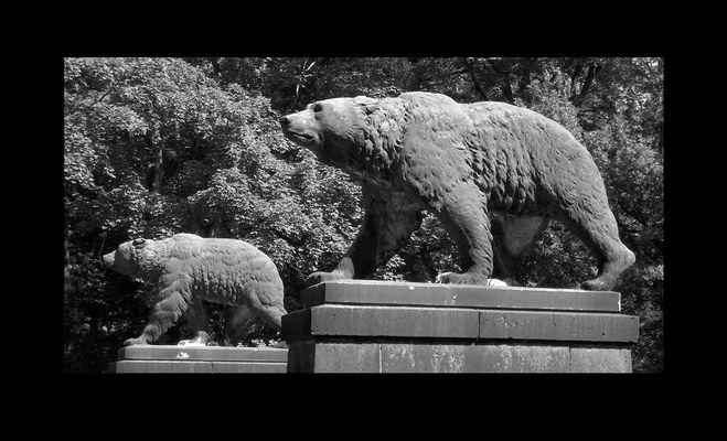 Der Askanische Bär