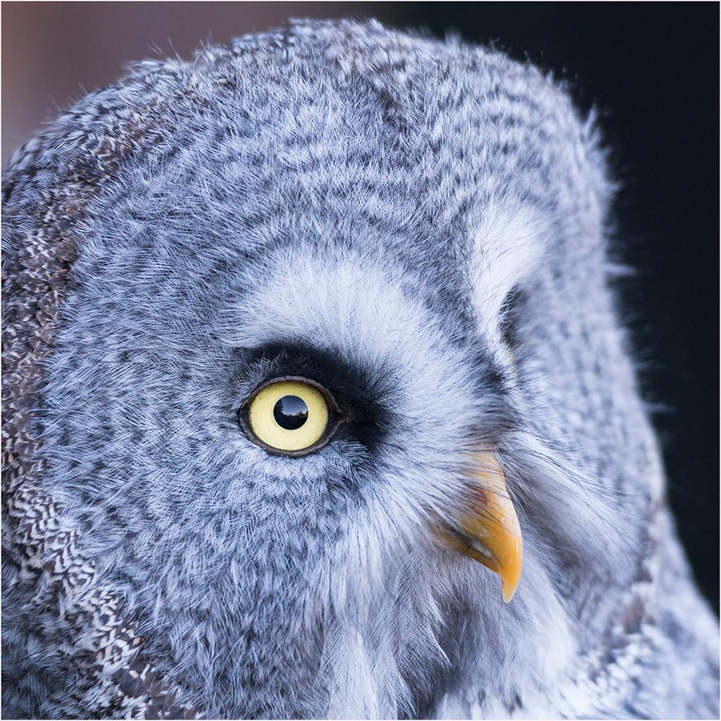 Der aufmerksame Blick