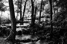 der Bach im Wald.... von SINA