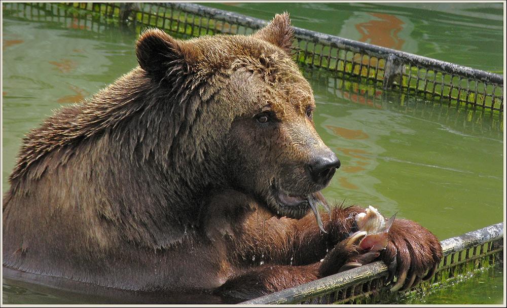 der Bär, der lieber nicht alleine wär...