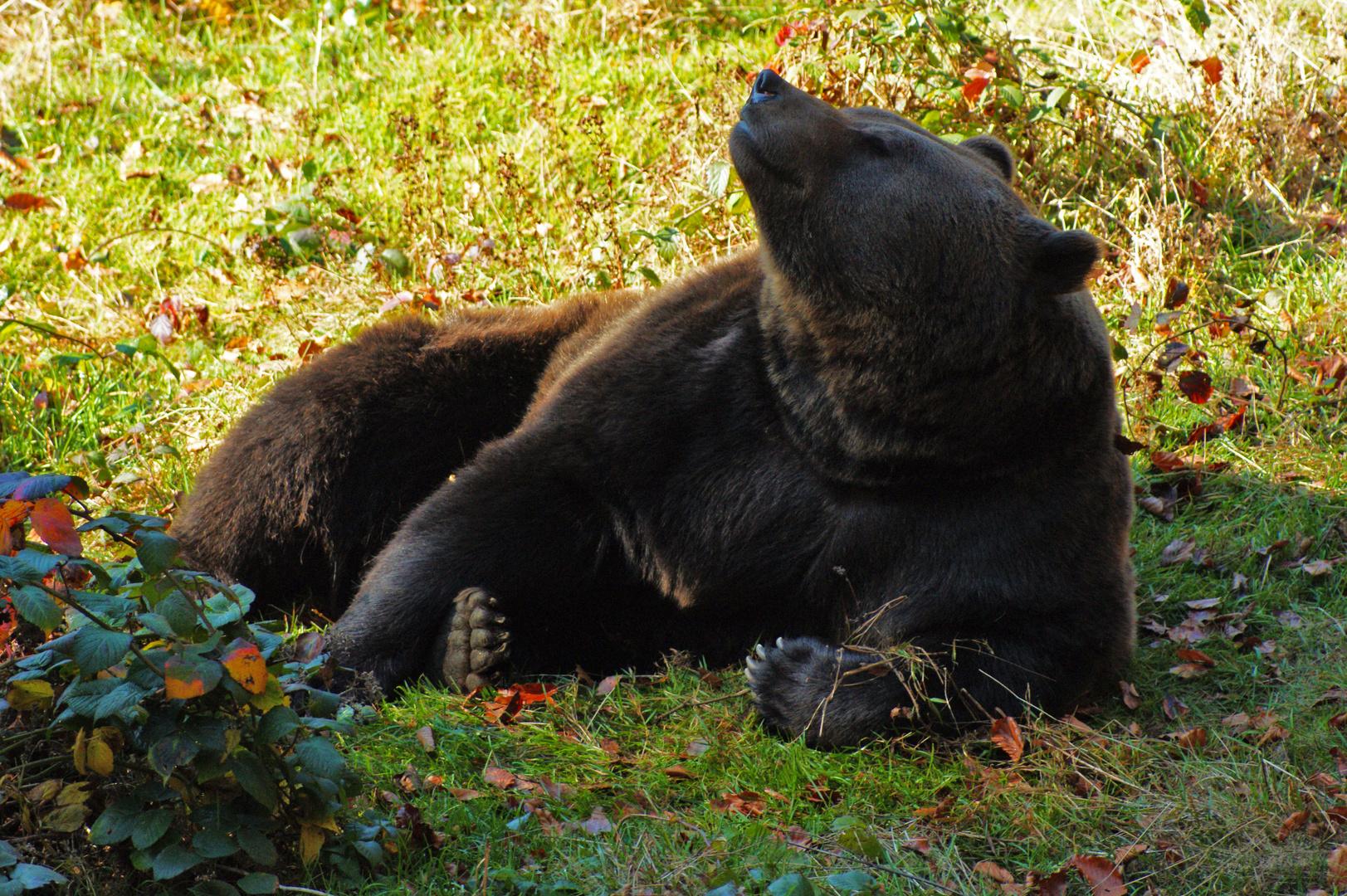 Der Bär genießt den Tag...