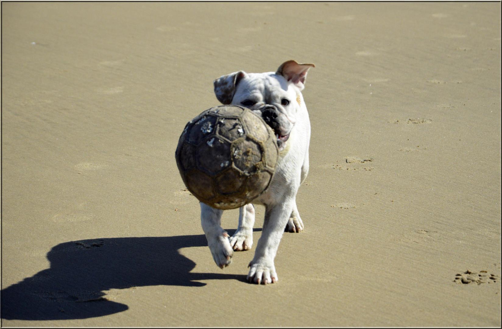 "Der ""Ball""-Dog !"