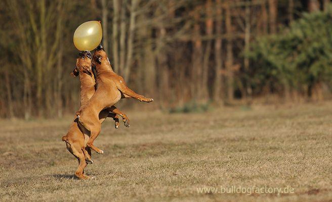 der Ballon und die Boxer