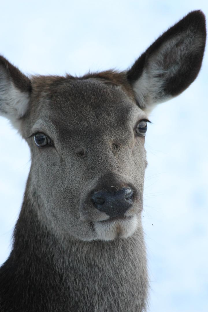 Der Bambi-Look