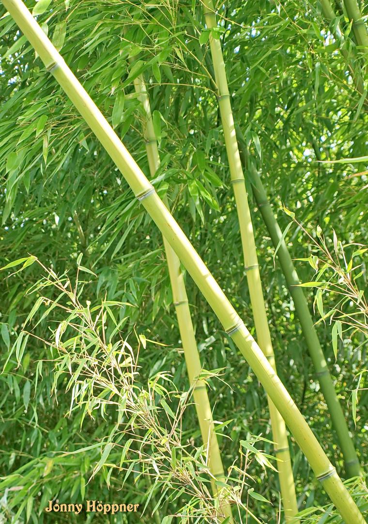 Der Bambuswald