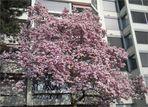 Der Basler Frühling