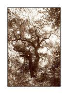 Der Baum (1)