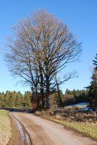 Der Baum 1