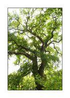 Der Baum (2)