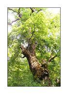 Der Baum (3)