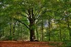 der Baum ....