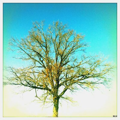 der Baum........