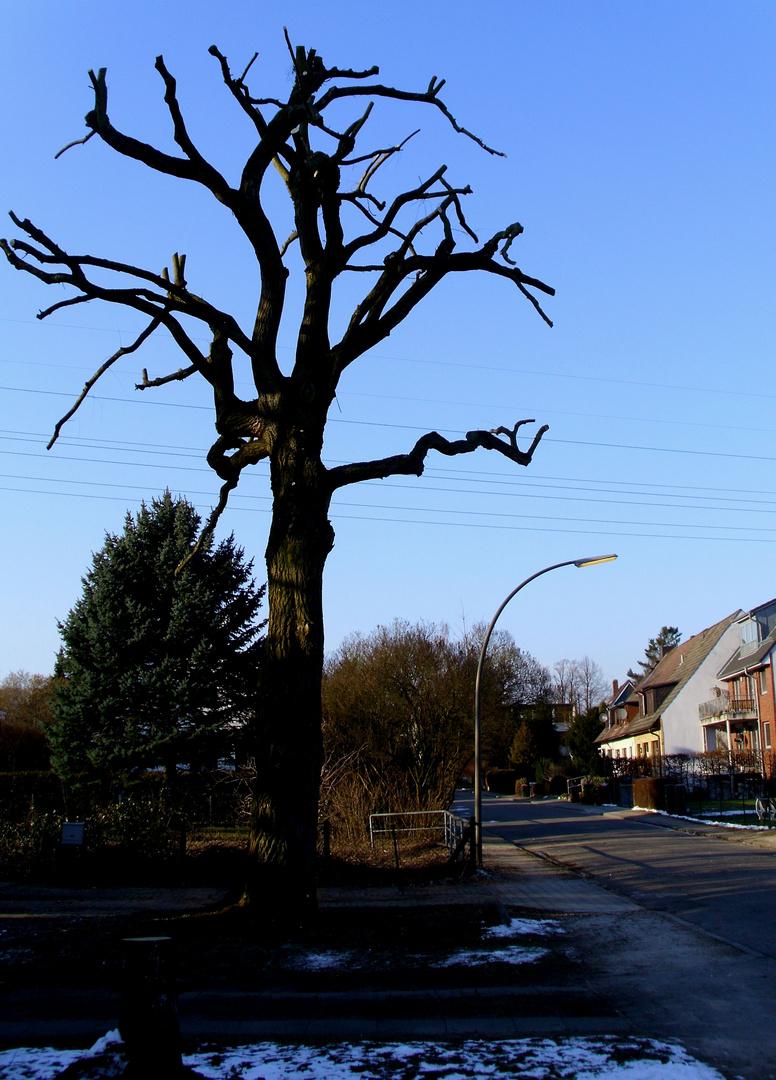 ... der Baum ...