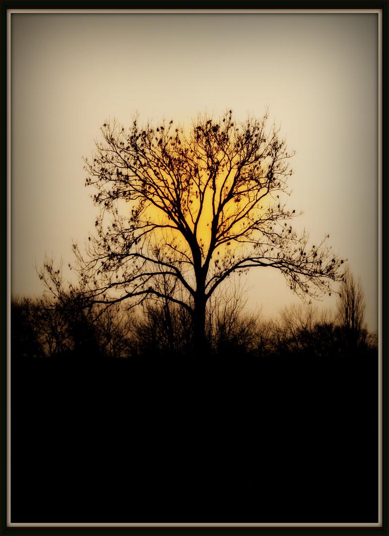 ~Der Baum~
