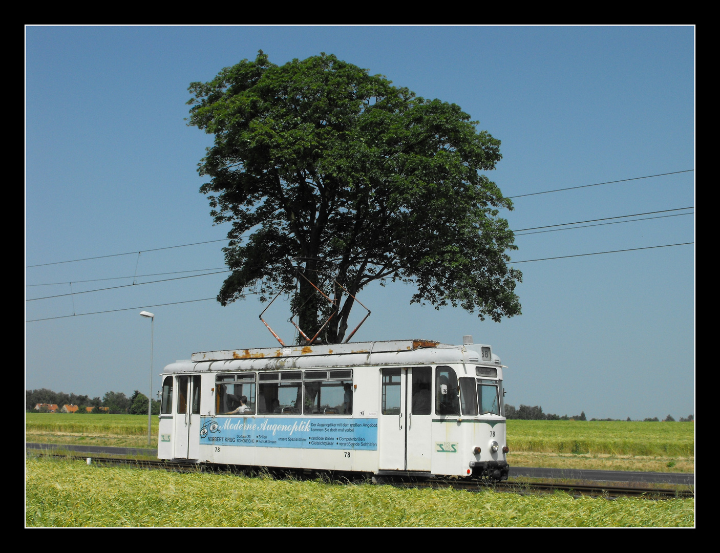 Der Baum als Sonnenschirm