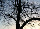 Der Baum am Friedhof