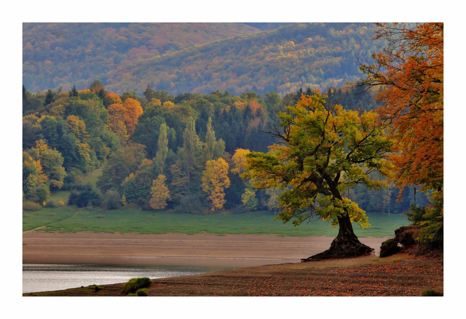 Der Baum am Herbstsee