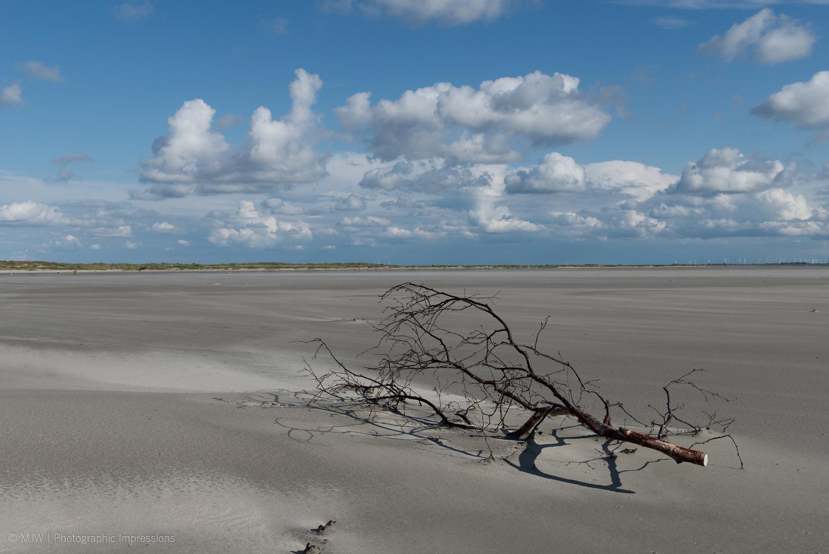 Der Baum am Nordseestrand