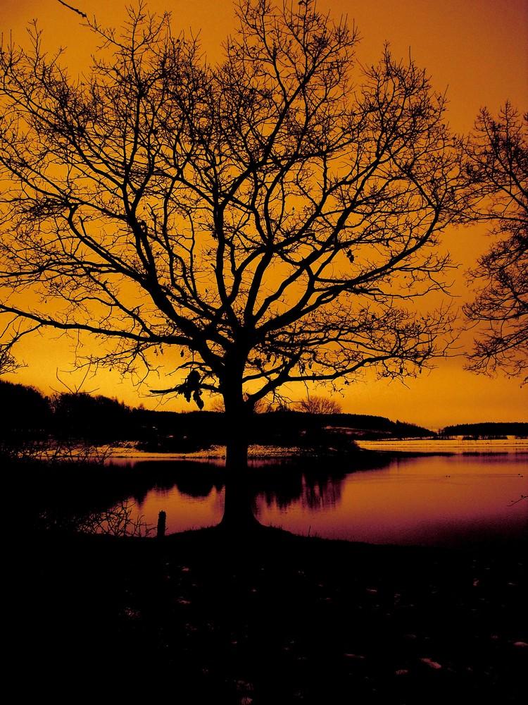 Der Baum am Wasser