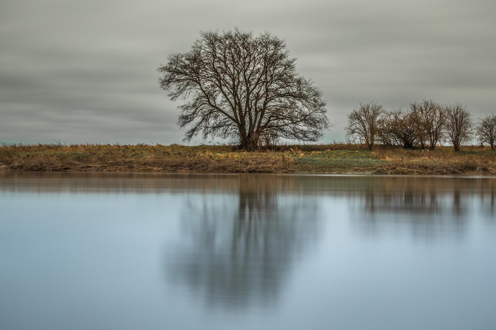 Der Baum an der Saale