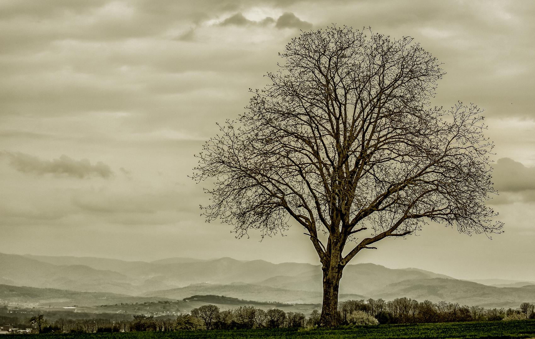 Der Baum...