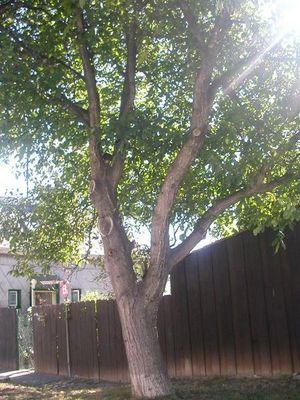 Der Baum!