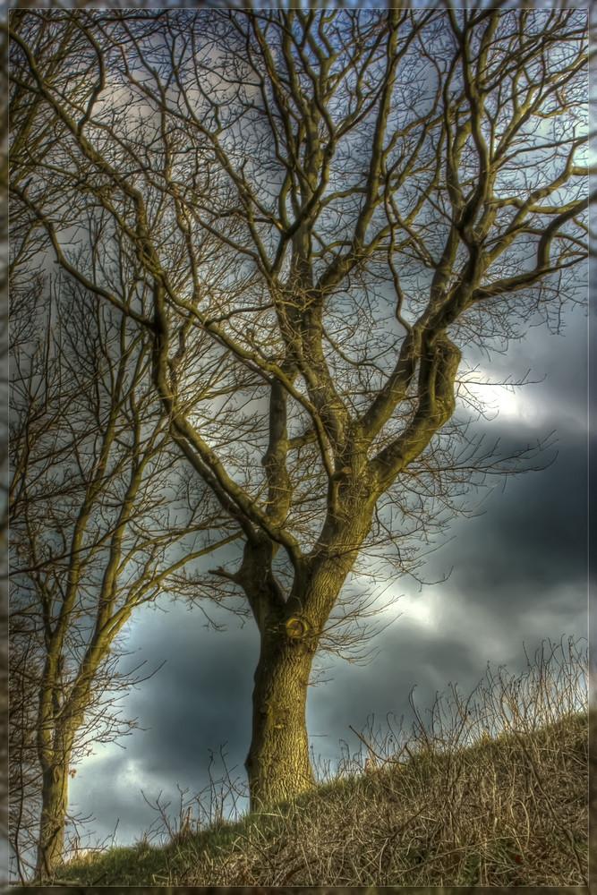 Der Baum !!!!