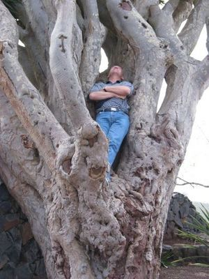 Der Baum der Ruhe