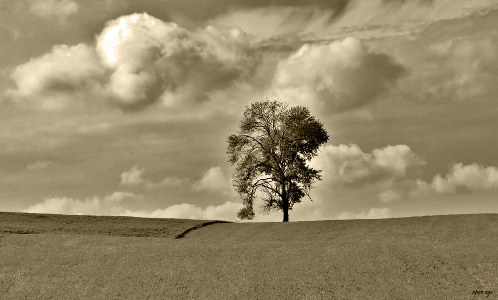 Der Baum ein Kraftspender