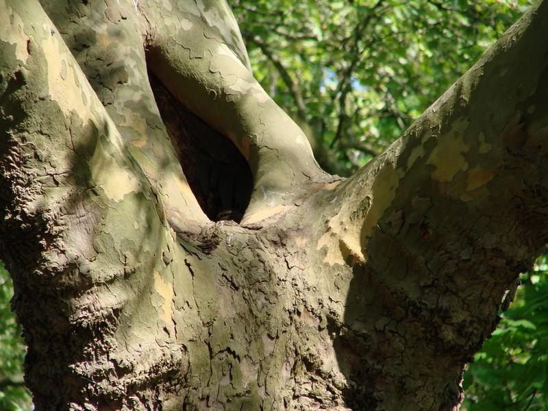 ...............Der Baum............