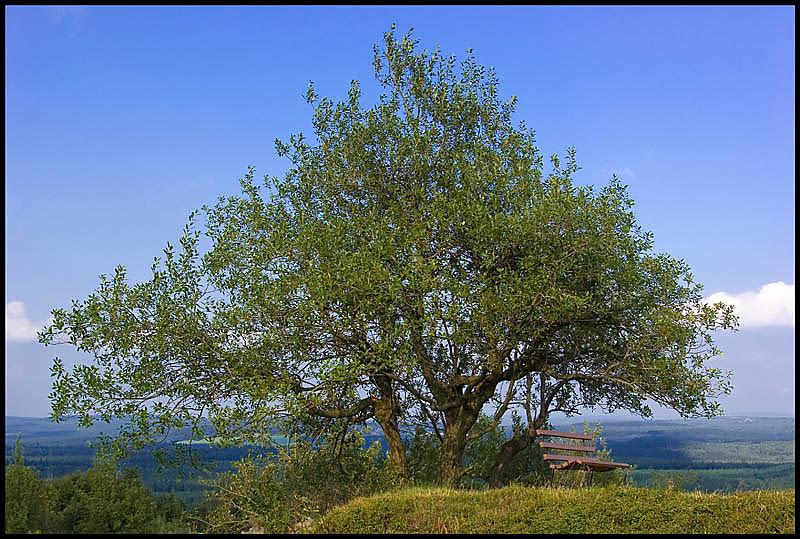 Der Baum *g