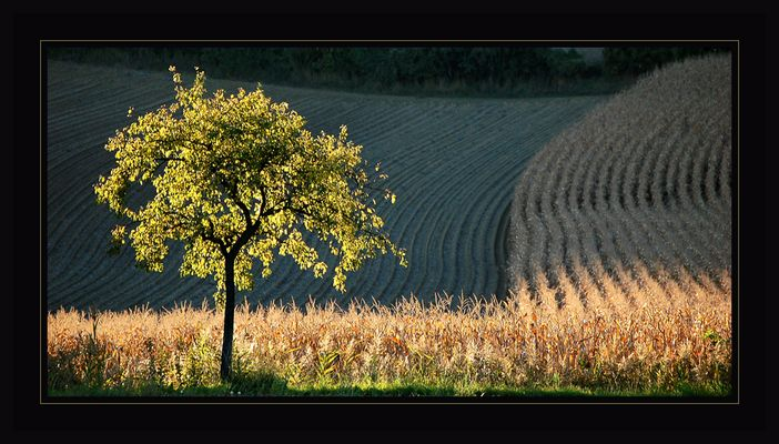 Der Baum ~ Herbstabend