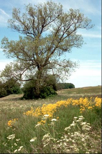 Der Baum I