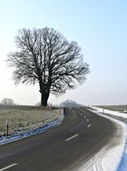 Der Baum II