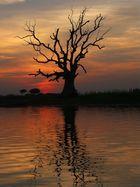 Der Baum.... II