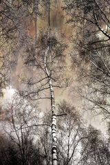Der Baum im Baum 1