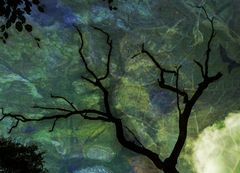 Der Baum im Baum 5