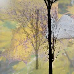 Der Baum im Baum 6