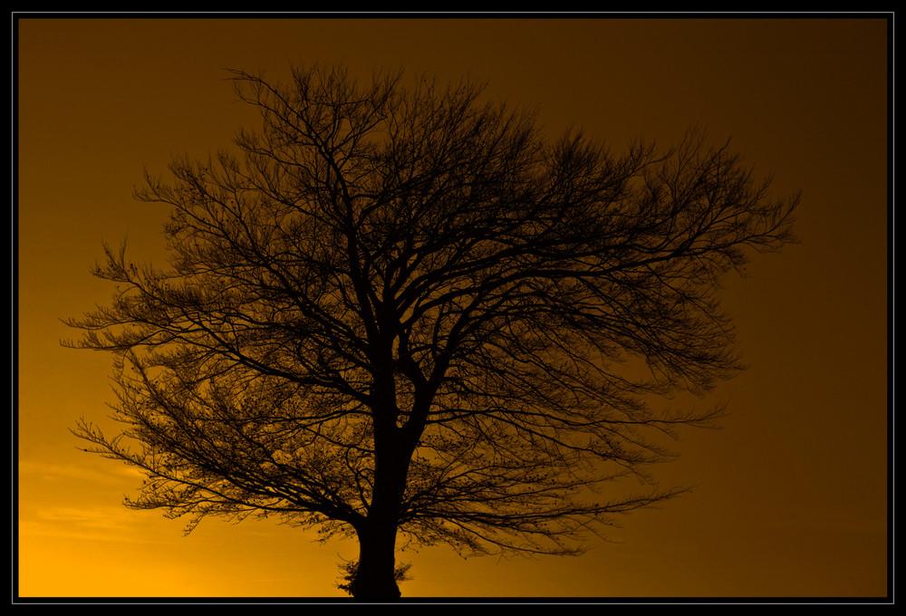 Der Baum Im Goldrausch