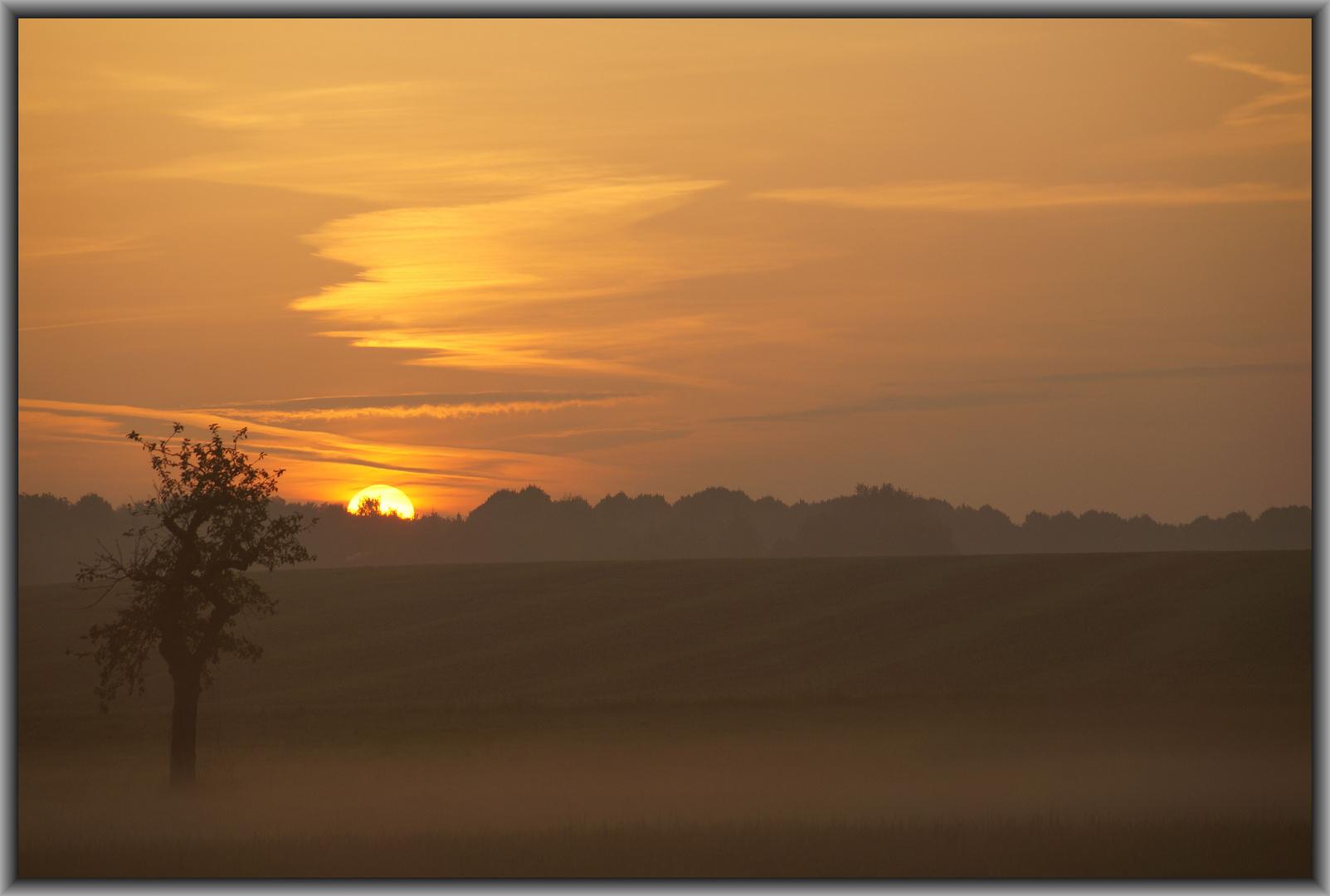 Der Baum im Morgennebel