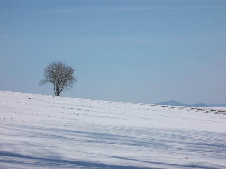 Der Baum im Schnee