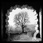 Der Baum im Tor